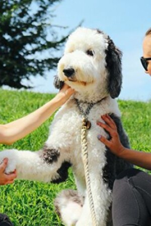 dog_blog_640x400